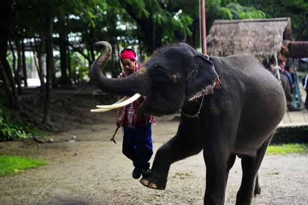 清迈大象训练基地