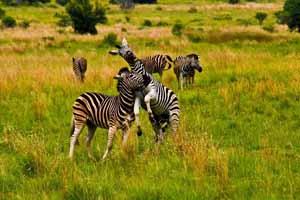 比林斯堡野生动物保护区