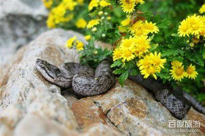 旅顺蛇博物馆
